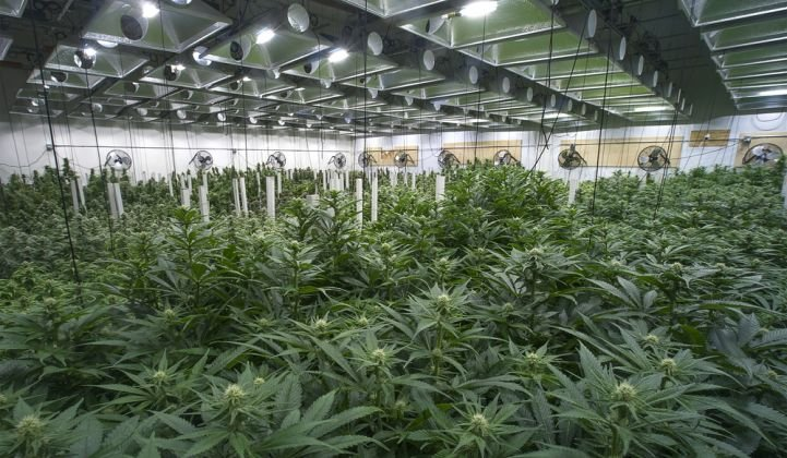 Wisconsin Medical Marijuana Law does not allow grow operations